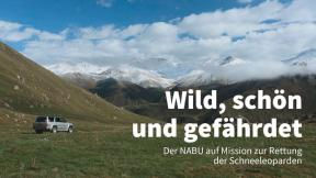 Wild, schön und gefährdet - Der NABU auf Mission zur Rettung der Schneeleoparden